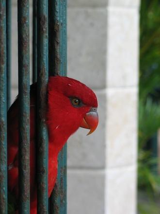 EI TAHA MÕJUDA VIHASE JA DOMINEERIVANA? Punase rõiva kandja mõjub vihase ja domineerivana