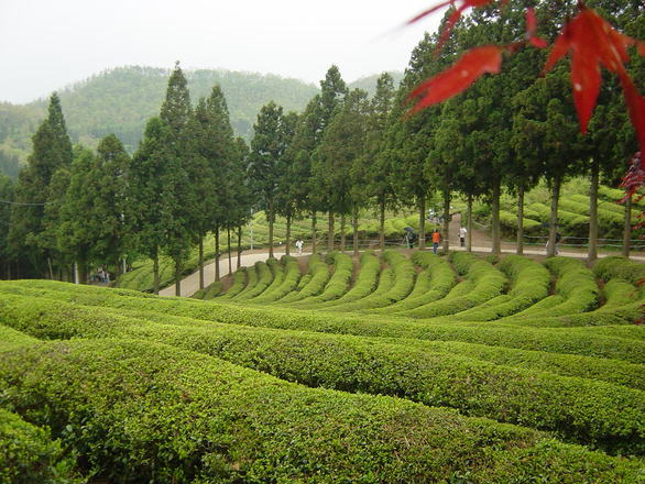 roheline tee