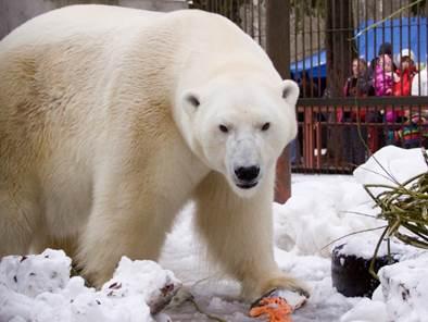 """PÄÄSTAME JÄÄKARU! Algas loomaaia joonistusvõistlus """"Päästame jääkaru"""""""