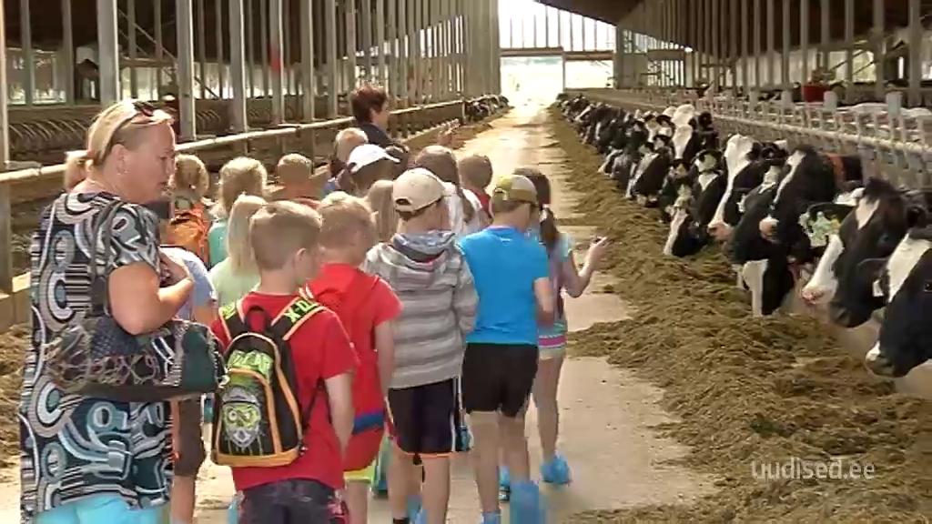 Lapsed õppisid Väätsa suurfarmis, et piim tuleb esmalt lehmast