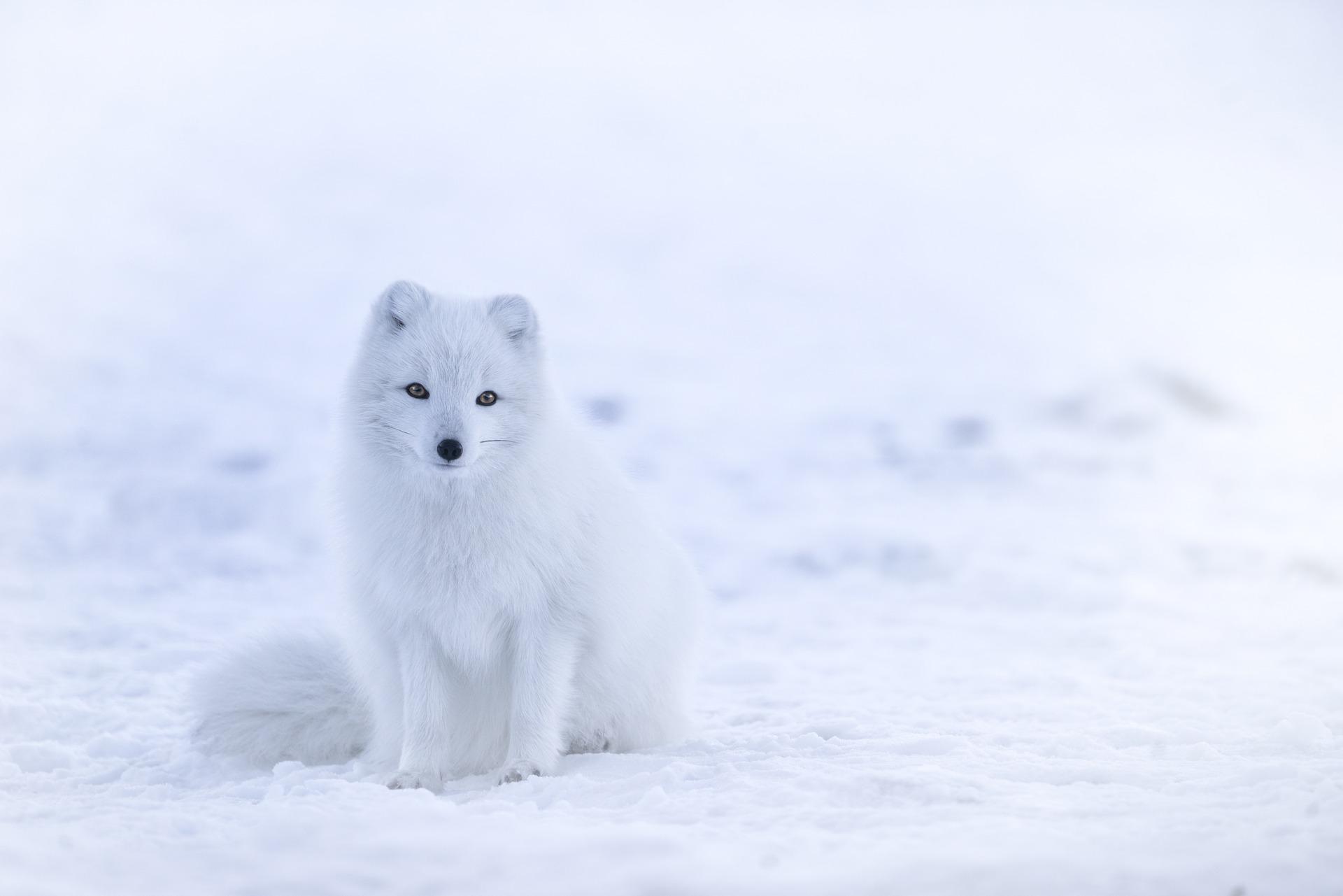 Versace loobus karusnahast! Loomakaitseorganisatsioonid juubeldavad